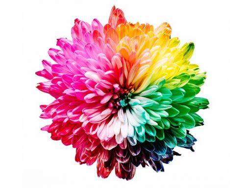 Welk kleurenschema past bij jouw woonstijl?