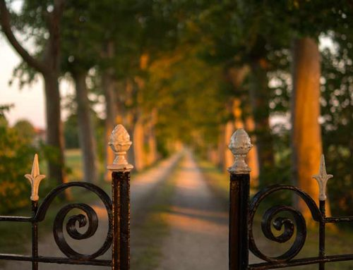 Schutting ideeën en inspiratie voor je tuin