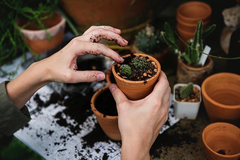 Achtertuin planten potten