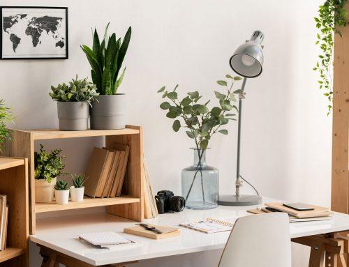 Kantoorplanten die je kantoor kleur geven