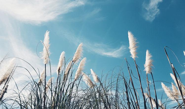 pampasgras pluimen tuin inrichten