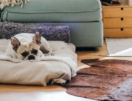 Zo maak je je huis hond-proof!