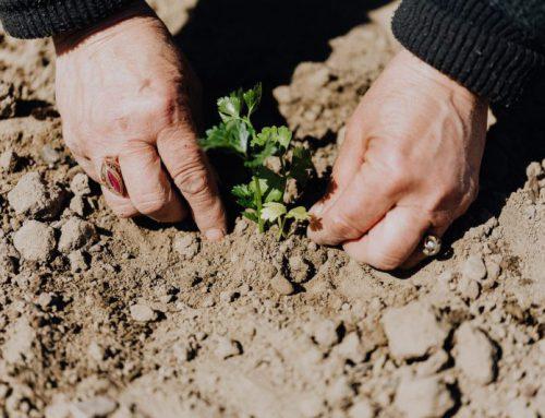 Praktische tips voor tuinonderhoud