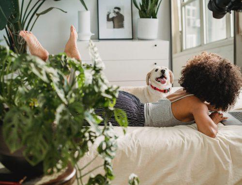 Welke luchtzuiverende planten plaats je in de slaapkamer?