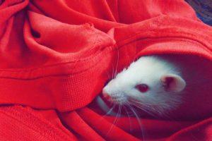 Met een natuurlijke geur muizen verjagen