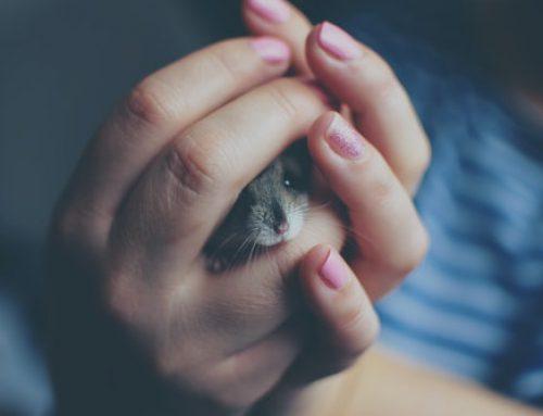 Muizen verjagen uit je huis met geur